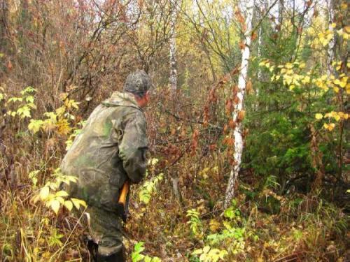 Благородный олень: способы и особенности охоты