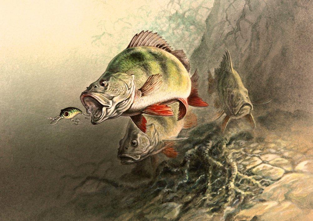 нас можете картинки про рыбалку для декупажа нижний новгород фотоотчет