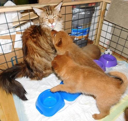 Кошка дразнилка 2.jpg
