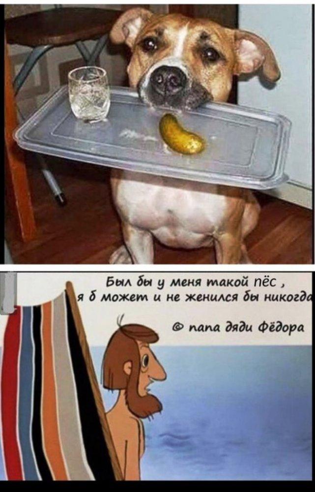 Шутки про собак в картинках