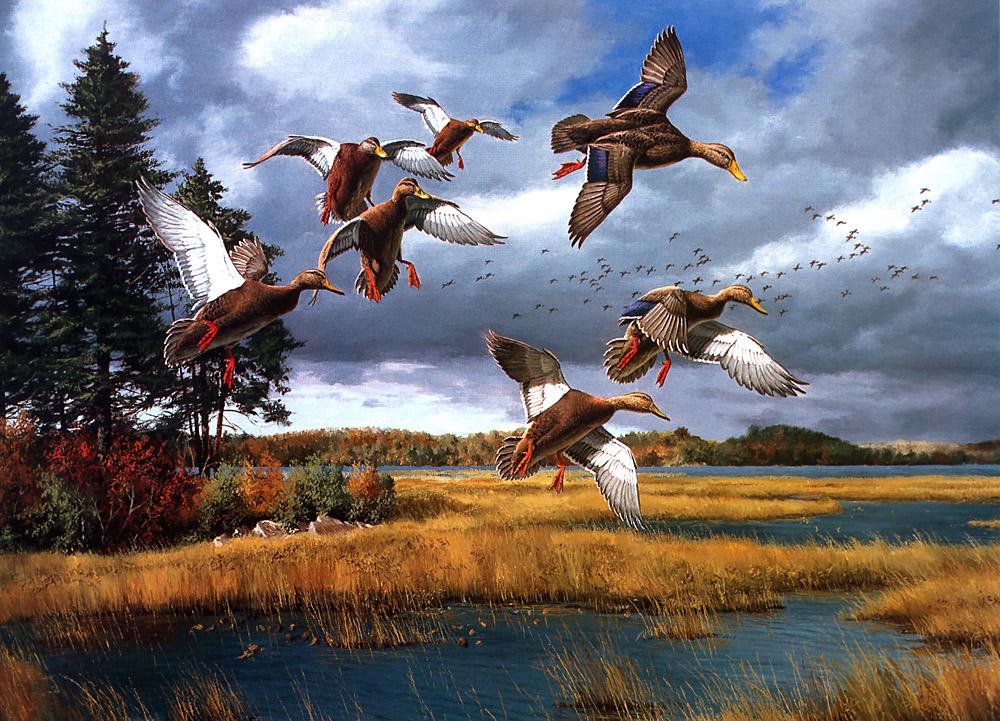 Картинки на тему охота высокого разрешения