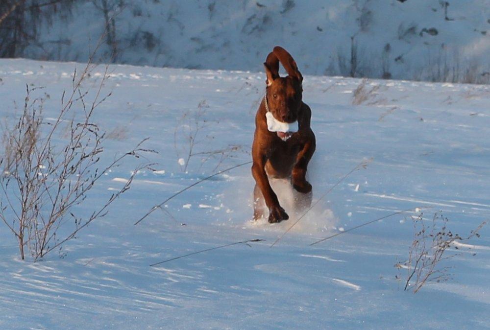 Собаке бог послал кусочек снега....Няшка.jpg