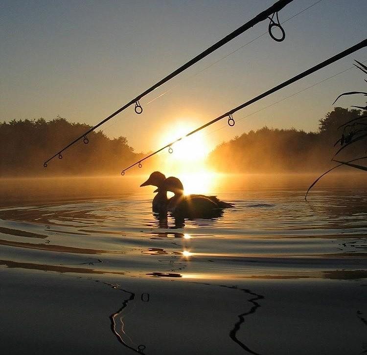 картинки рыбалки ночью середине сентября судья