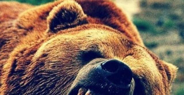Медведь напал на охотника