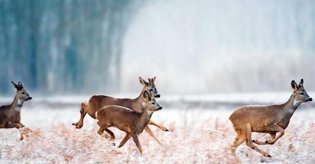 В РФ хотят стимулировать охрану и использование охотничьих животных