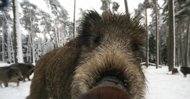 Два охотничьих хозяйства на Алтае лишили лицензии