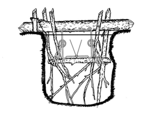 Ловушки на бобров своими руками