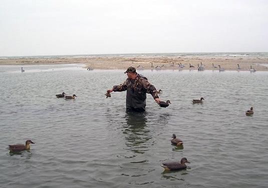 Поэтому все большую популярность приобретает замена подсадной утки чучелом.  Сегодня.