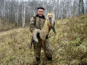 Первая добытая лиса